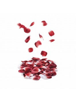 Rose petal explosion - Palescent Petals - 100 petals